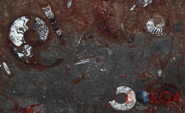 Gran Fossil Borga Marmi