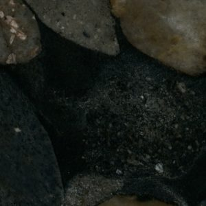 Black Mosaic Gold Borga Marmi 1
