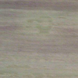 Wild Sea Borga Marmi 1